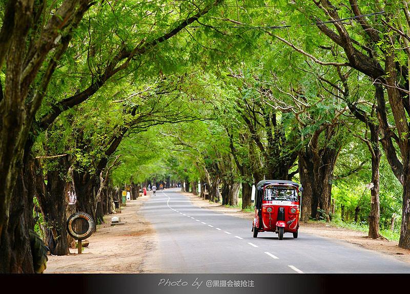 2012年2月6日 斯里兰卡 Ella-Galle途中<br /> 绿色的长廊,红色tuktuk,单纯的认为好看就拍了