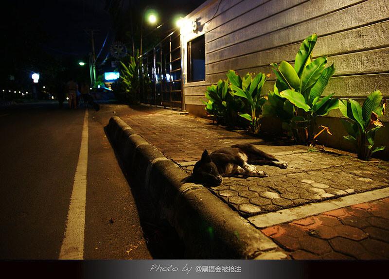 2012年7月29日 巴厘岛 库塔<br /> 夜的街,一只有点邋遢的狗狗舒服的卧着,全然不在乎过往的路人,因为没有人会伤害它