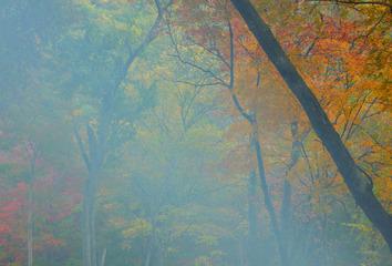 梦里的秋色