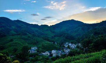 茶乡龙井村(2)