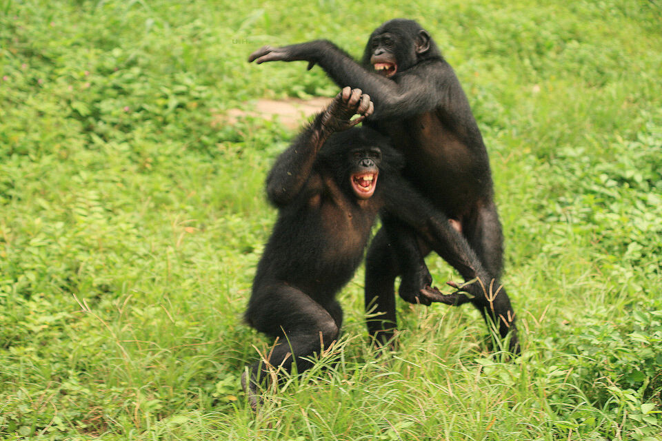 LOL-3<br /> Boyoma & Kikongo@Group 3, Lola<br /><br /> Laugh out loud
