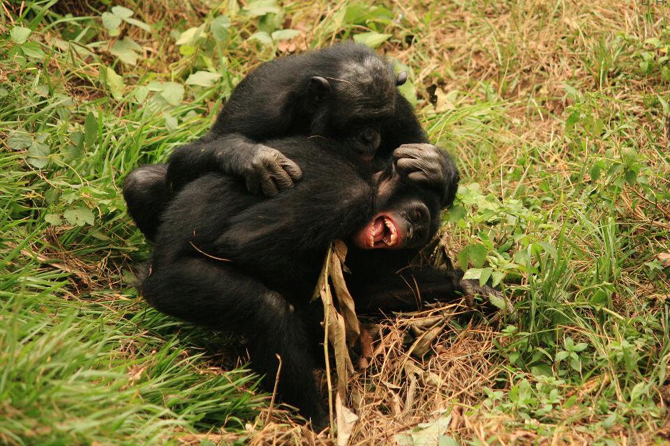 Lol-21 Kikongo & Boyoma@Group 3, Lola, Kinshasa<br /> Kikongo: 悄悄告诉你,我昨晚撒了泡尿在那母老虎Sankuru喝水的地方<br /> Boyama: 哈哈哈哈,太解气了!