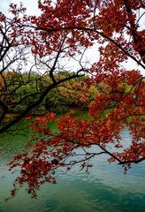 颐和园后溪(7)2020-10-30 b