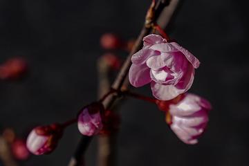 北京明城墙遗址公园花卉(2)2019-3-12 b