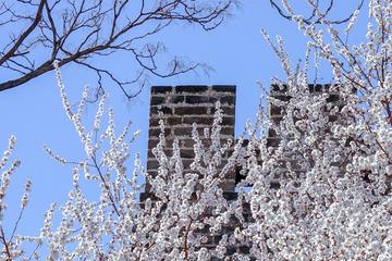 北京明城墙遗址公园花卉(1)2019-3-12 b