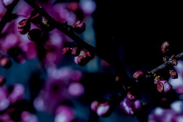 北京明城墙遗址公园花卉(2)2019-3-12 c