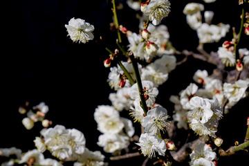 北京明城墙遗址公园花卉(2)2019-3-12 e
