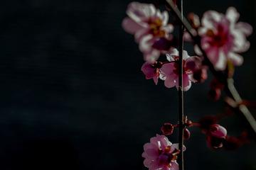 北京明城墙遗址公园花卉(3)2019-3-12 c