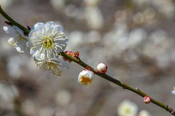 北京明城墙遗址公园花卉(1)2019-3-12 g