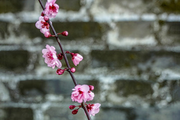 北京明城墙遗址公园花卉(3)2019-3-12 e