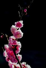 北京明城墙遗址公园花卉(3)2019-3-12 d