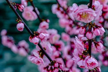 北京明城墙遗址公园花卉(3)2019-3-12 h