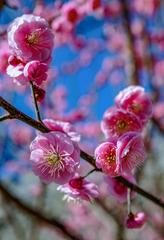 北京明城墙遗址公园花卉(1)2019-3-12 d