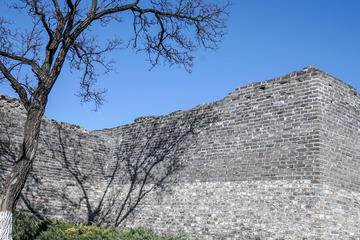 北京明城墙遗址公园花卉(1)2019-3-12 f