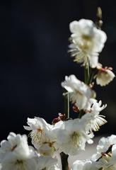 北京明城墙遗址公园花卉(3)2019-3-12 b