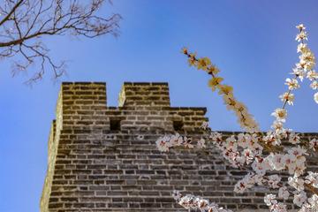 北京明城墙遗址公园花卉(1)2019-3-12 e