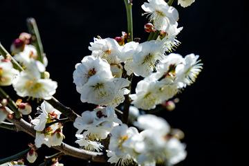 北京明城墙遗址公园花卉(2)2019-3-12 h