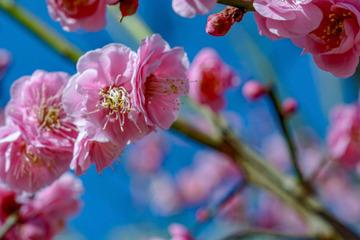 北京明城墙遗址公园花卉(1)2019-3-12 h