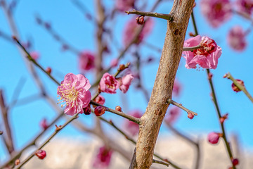 北京明城墙遗址公园花卉(3)2019-3-12