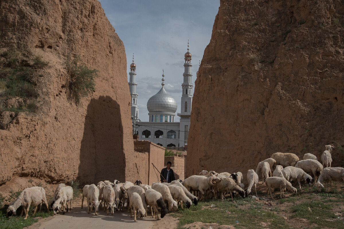 2018年5月29宁夏同心县下马关镇,羊群走过夯土的古城墙。