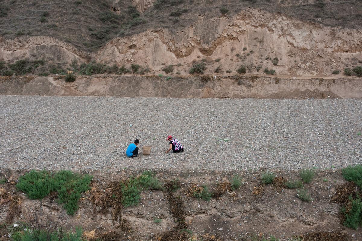 2015年8月8日甘肃皋兰县,为防止水分蒸发用砾石覆盖农田抗旱。