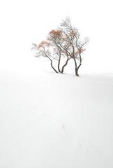 北风卷地树枝折