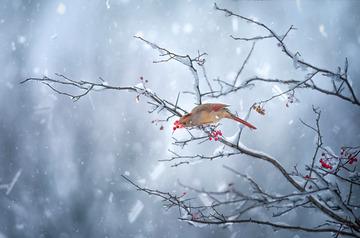 土狼屯的第一場雪