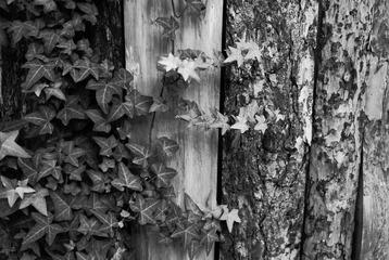 祖母家的绿篱