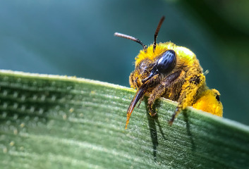 翻山越岭去采蜂