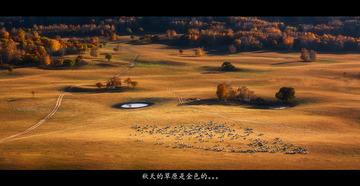 秋天的草原是金色的。。。