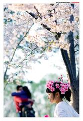 四月樱花8
