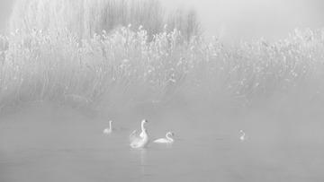 《伊宁湖面千重雅,雾点波心一颗珠》