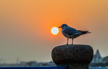 青岛的落日与海鸥