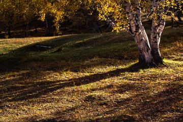 秋天的阳光