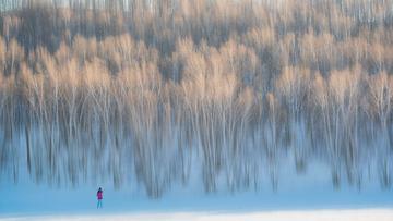 雪中的白桦林