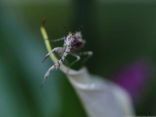 刺花与水芋花
