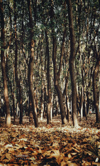 四五点的小树林