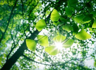 立夏的阳光