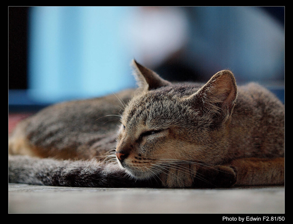 cat at sule pagoda<br /> sleepy cat