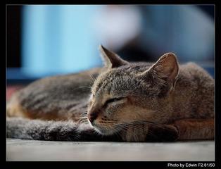 cat at sule pagoda