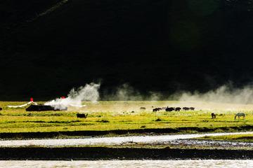 川西草原风光