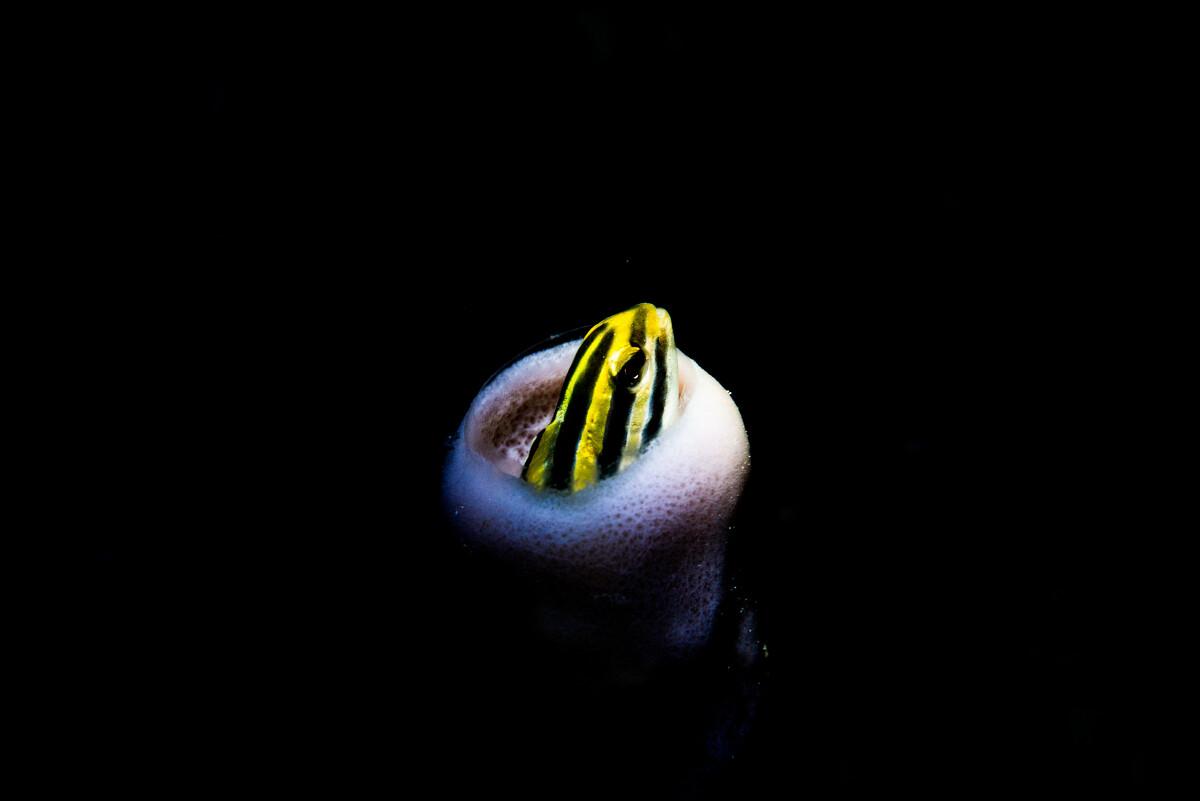 DS视讯app-原创王菲深夜现身李亚鹏寓所,戴冬帽穿羽绒服重保暖,前任叙旧心情好