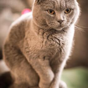 好冷殿下威廉猫?
