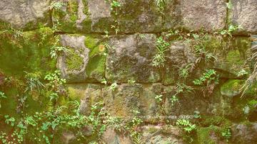 石墙上的草原