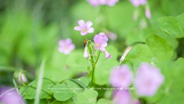 小虫与花朵