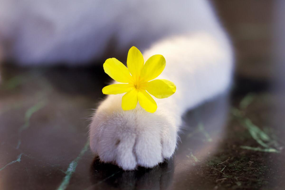 狗狗为什么会一直摇尾巴?摇尾巴有什么含义吗?