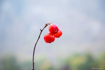 秋天里的果实