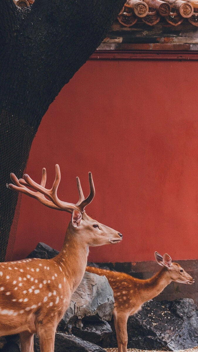8乐游官网最新正版下载-私募基金存量机构数量罕见下降 行业分化小型机构或首当其冲