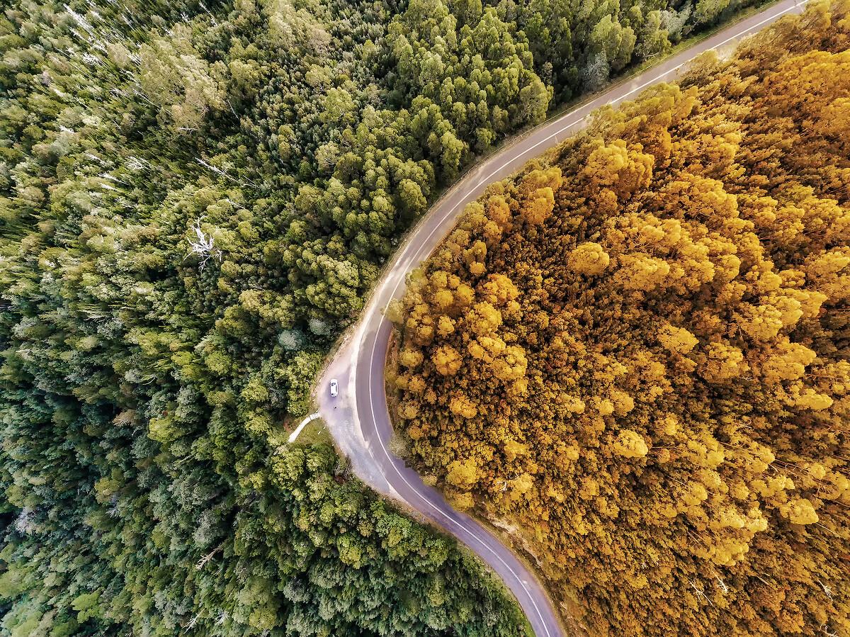 平分秋色 - 摄于澳大利亚塔斯马尼亚