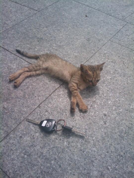 nimi cat<br />